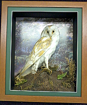 OWL Box Framing £70